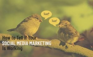 r Social Media Marketing is Working featured image