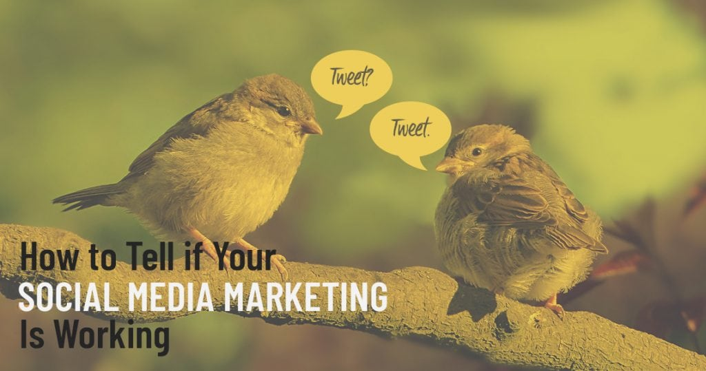 r Social Media Marketing is Working header image